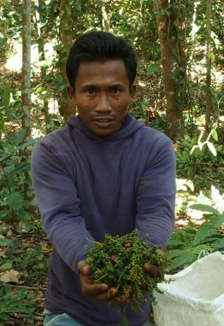 Poivre de Lampong