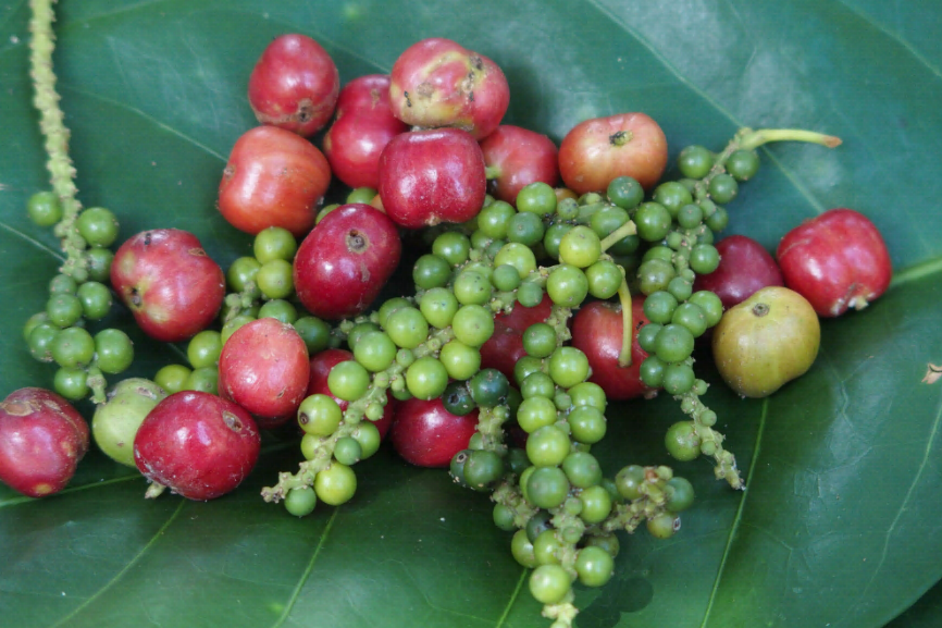 Grains de café et poivre Lampong