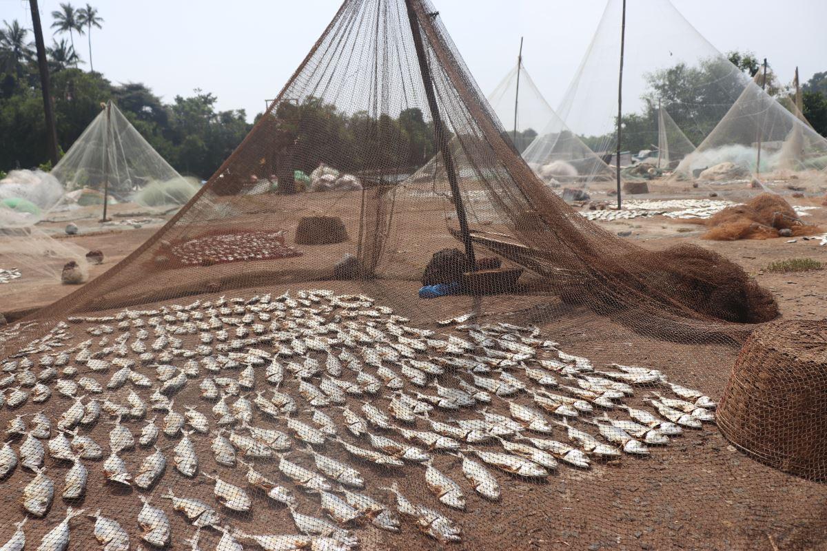 Goa poissons séchés