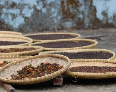 séchage du poivre Cubèbe -Terre Exotique