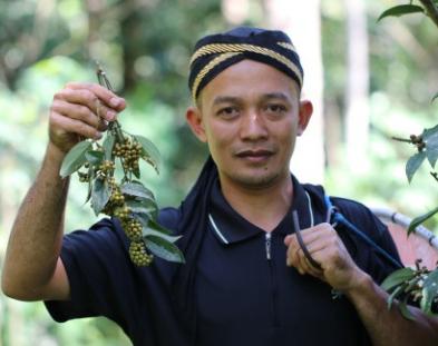 Récolte du poivre Cubèbe - Terre Exotique