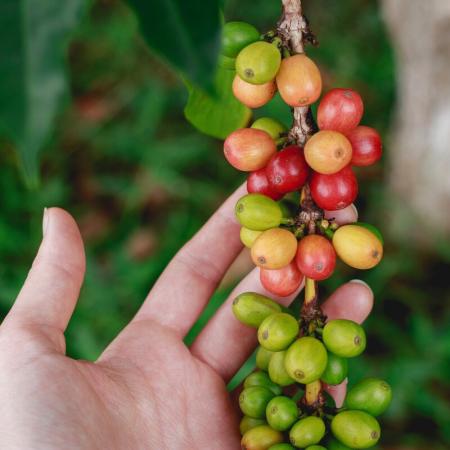 LA SÉLECTION DE CAFÉS BIOLOGIQUES TERRE EXOTIQUE
