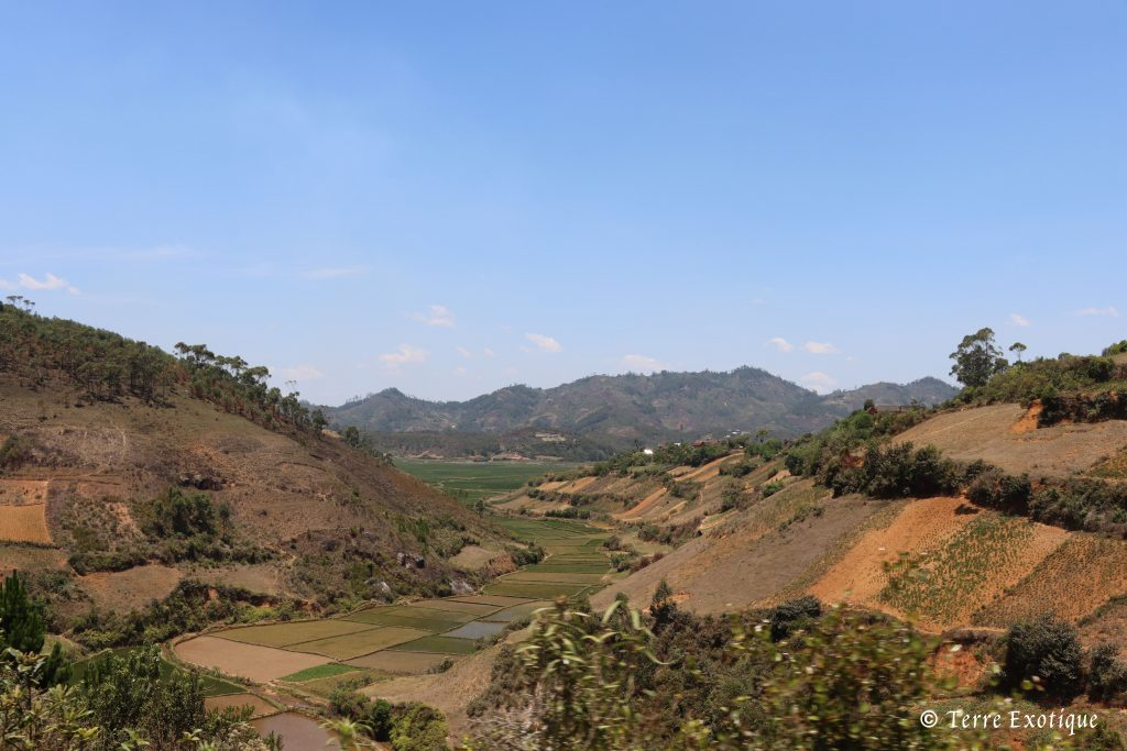 Madagascar Terre Exotique